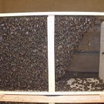 4lb. Package bees with Quebec Queen